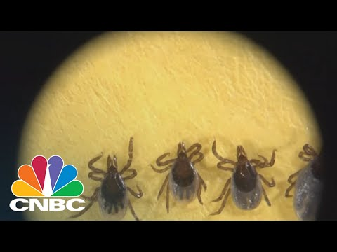 CDC Reports Massive Increase In Mosquito And Tick-Related Diseases | CNBC