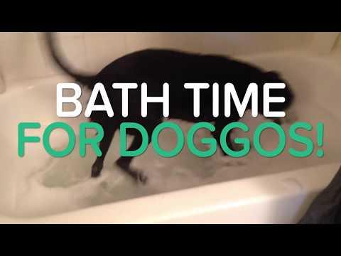 BATH TIME FOR DOGGOS