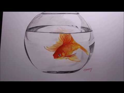 Goldfish in a bowl pencil drawing time lapse