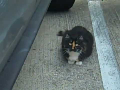 Not Venus the Chimera split face Kitty cat