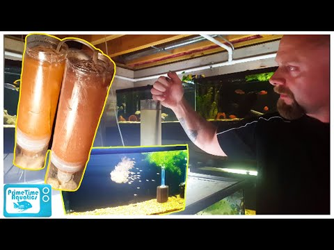 How to Set Up a Baby Brine Shrimp Hatchery