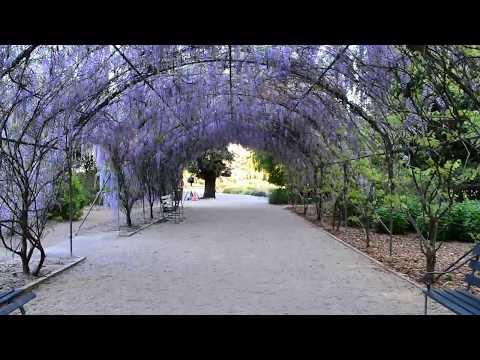 Adelaide Botanic Gardens - Wisteria Arbor