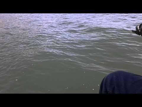 Willard bay walleye fishing