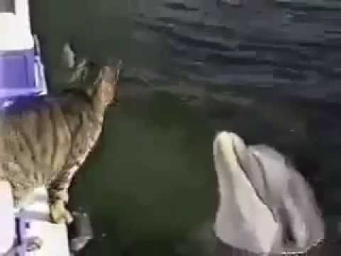 Cat Dolphin boat video / I Bet You Will Watch This Video Twice