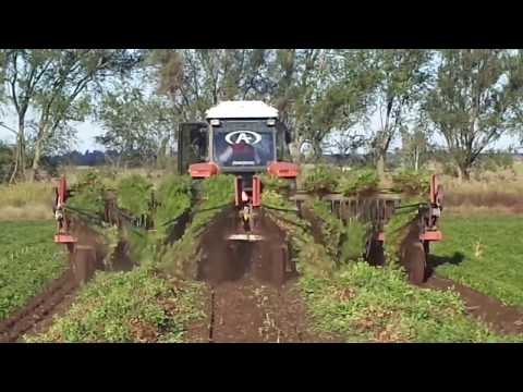 World Amazing Modern Agriculture 2017 How it works to Harvest Peanut Harvesting Machine Combine