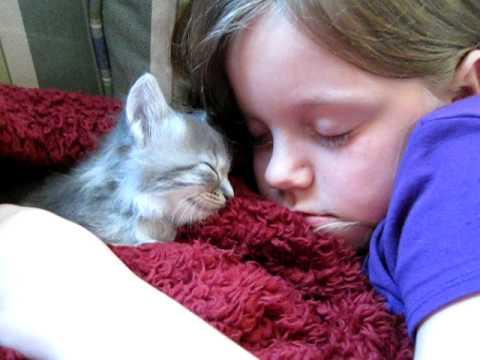 kitten sleeping with girl