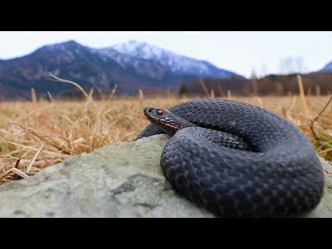 Herping 2018 First Snakes of Spring