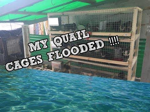 MY QUAIL CAGE FLOODED!!!! : Installing the quail condo