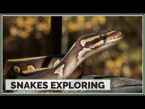 18 Minutes of Snakes Exploring