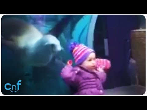 Sea Lion Plays With Girl | Fetch Doggie!