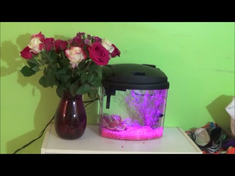 How To Set Up A Fish Tank  (Aqueon bettabow 2.5)