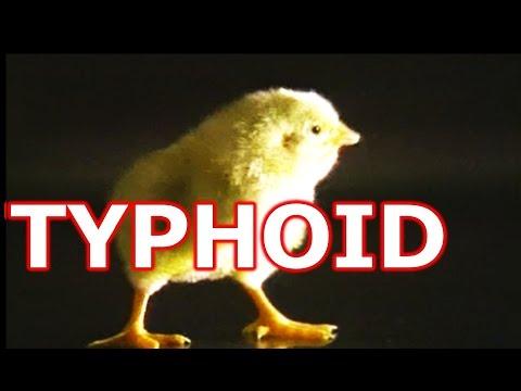 Pullorum-Typhoid Bacteria Detection Prevention & Symptoms