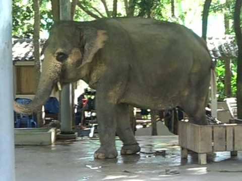 Elephant Trying to Stay Cool...Injured in Northern Thailand
