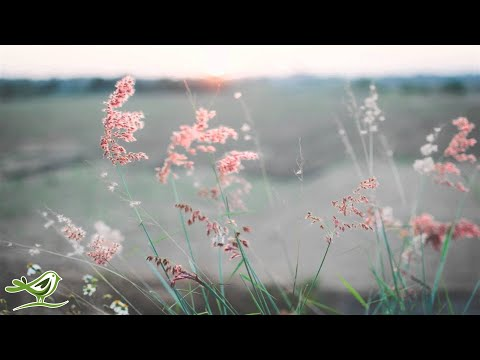 3 Hours of Beautiful Violin, Piano, Harp, Flute & Guitar Music | Instrumental Music Playlist