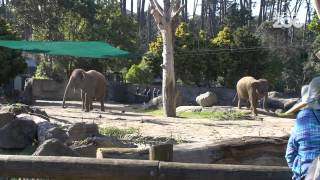Zoo Tales - Anjalee and Burma