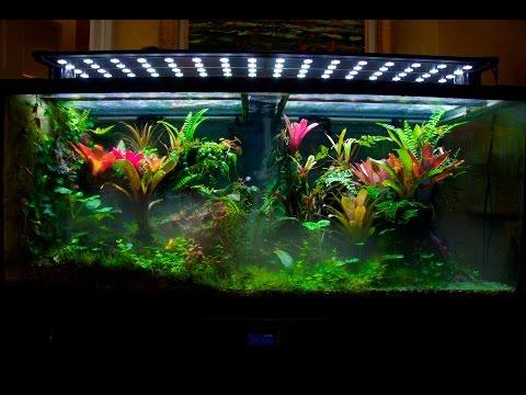 Display Vivarium tour and tips to grow a thriving tank