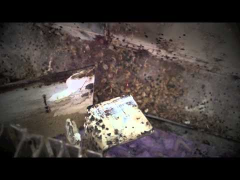 BBB Extermination Services - Rise Of The Bed Bug
