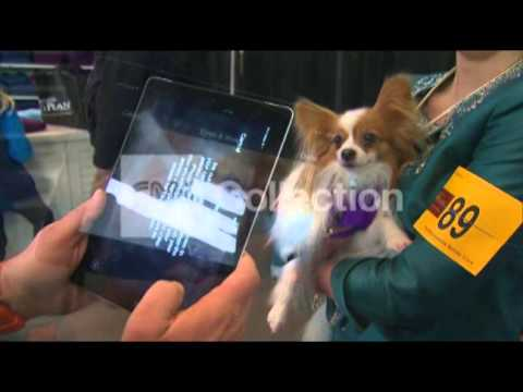 FACIAL RECOGNITION APP FOR LOST DOGS (COOL!)