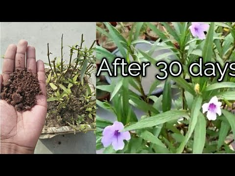 This fertilizer helps your plant to grow fast and also helps to make more blooming