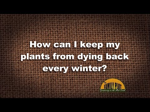 Q&A – How can I keep my plants from dying back every winter?