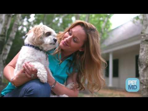 Hot Spots in Pets