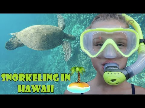 Snorkeling in Hawaii 🏝 (WK 343.5) | Bratayley