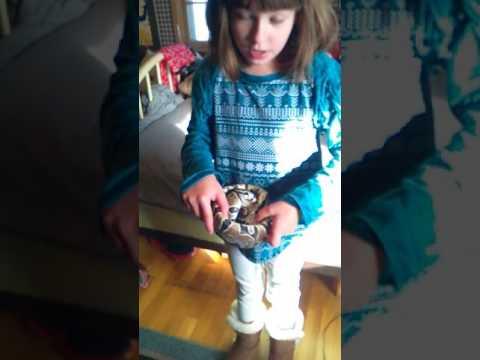 Karlie doing beginner's guide on ball python