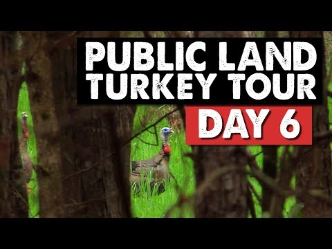 GOBBLING UP A STORM! -  Public Land Turkey Hunting
