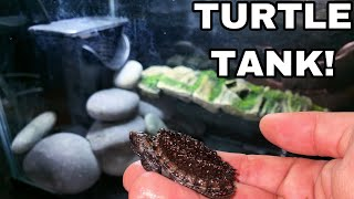 Download NEW Baby Snapping TURTLE TANK for GODZILLA! Video