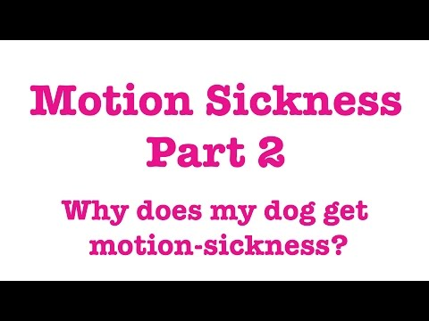 Motion Sickness In Dogs Part 2 - Why Do Dogs Get Motion Sick