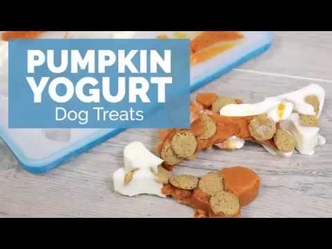 DIY - Pumpkin DOG TREATS