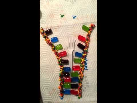 DNA replication. Candy style(1)