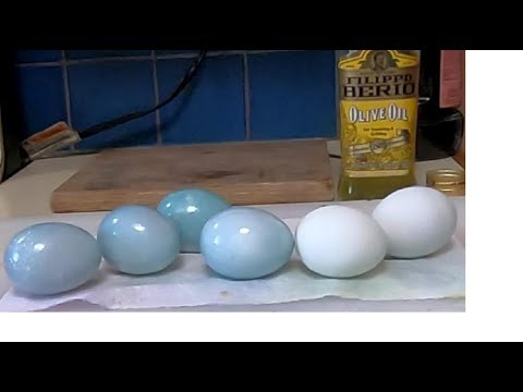 Robin Egg Blue Eggs with Natural Dye - Red Cabbage