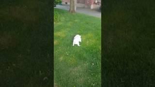 Pipi no gramado.
