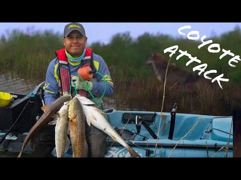 Coyotes and Redfish in a Texas Bayou | Hobie Kayak Fishing
