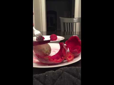 How to cut a Prickly Pear without getting Pricked!!
