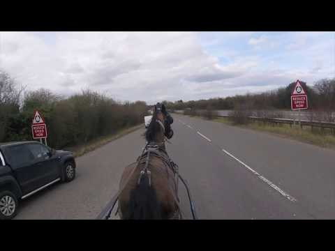 Training a Friesian mare down town - Barry Hook, Horse Drawn Promotions