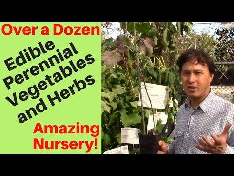 Over a Dozen Edible Perennial Vegetables & Herbs - Amazing Nursery