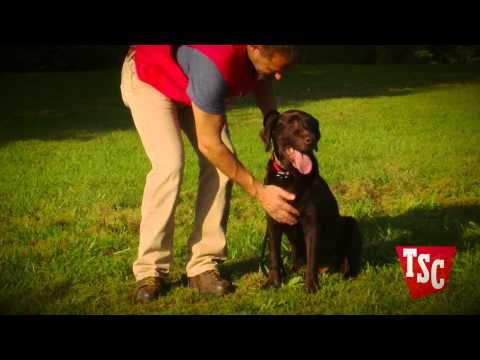 Training Your Pet for an Underground Wireless Fence