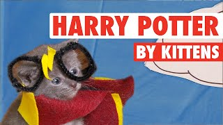 All 8 Harry Potter Movies By Kittens In 7 Minutes