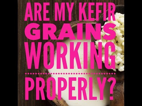 Are My Probiotic Kefir Grains Working?