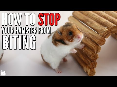 HOW TO STOP A HAMSTER FROM BITING