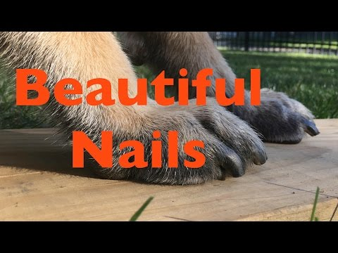 When is it Time to Trim Your Puppies Nails