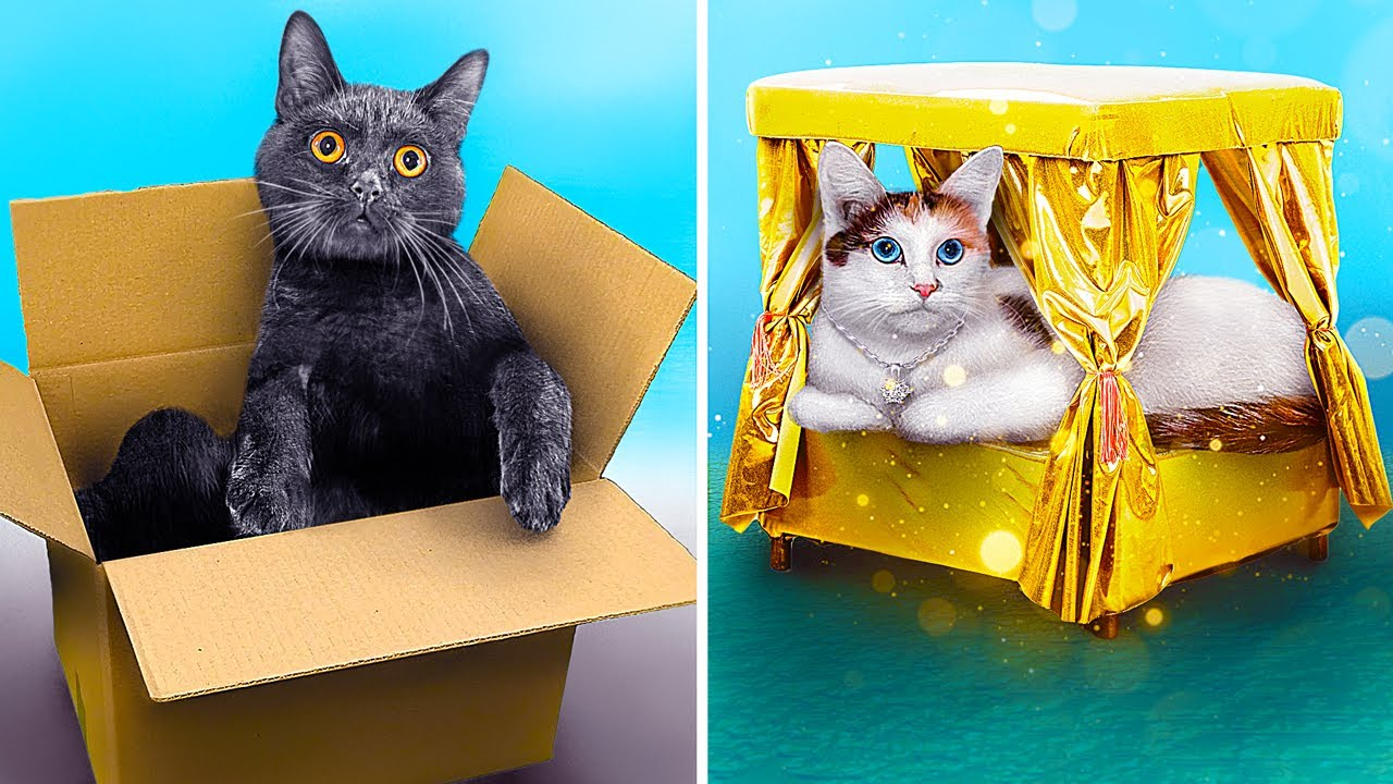 Rich vs Broke Pet Owners
