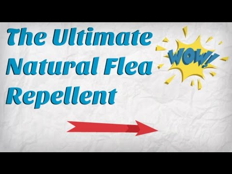 Natural Flea Repellent for Dogs | Healthy Way to Repel Fleas | #1 Flea Control Method