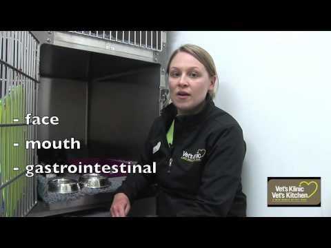 Pet poisoning - Antifreeze