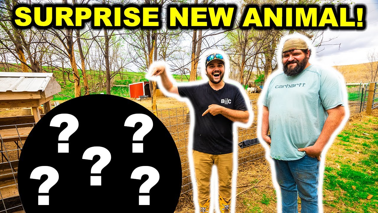 STRANGER Surprises Me with a NEW Backyard Farm ANIMAL!!!!
