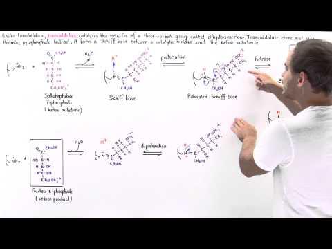 Mechanism of Transaldolase
