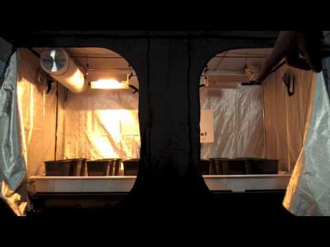 Mother Plants & Vegging Room Grow Tent | Grow Room Designs | GrowRoom Set up layout