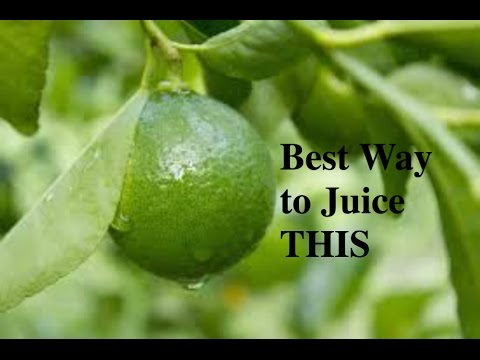 JUICY BABY! How to Juice Lime and Epica Juicer Review!
